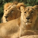 08. Bibliai állatkert és vadaspark