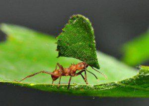 Eredj a hangyához