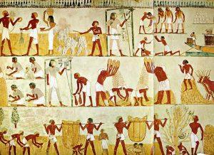 Egyiptomi gabona 1