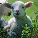 28. Hol akarod megenni a húsvéti vacsorát? – Az utolsó vacsora – óraterv
