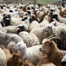 34. Miről ismerjük fel Jézust? – Példázat a juhokról és kecskékről: Jézus és igazi követői – óraterv
